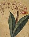 Desenho de Planta - Álbum M A B A D - Prancha 4, Acervo do Museu Paulista da USP (cropped).jpg