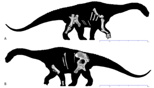 Diamantinasaurus - Holotype skeleton in (a) right and (b) left views