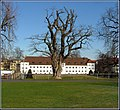 Die 200-jährige Robinie vor der Orangerie - panoramio.jpg
