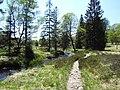 Die Hill zwischen Herzogenhügel und wallonischen Venn - panoramio.jpg