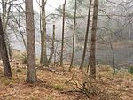 Dieksbach im Naturschutzgebiet Dieksbeck.jpg