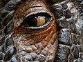 Dinosaur eye... (2071196930).jpg