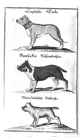 Alaunt - Three types of dogs. English dogge, Danzing Bullenbeisser and Brabant Bullenbeisser