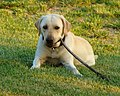 Dogs in Action - Flickr - The Central Intelligence Agency (7).jpg