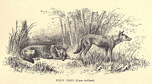 Douglas_Hamilton, Wild Dogs...25.