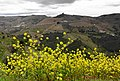 Douro vineyards in springtime, Portugal - panoramio.jpg