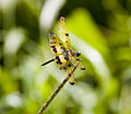 Dragonfly-backwaters.jpg