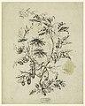 Drawing, Bough of a fantastic tree, 1775–1800 (CH 18350119).jpg