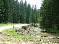 Drum forestier - panoramio.jpg