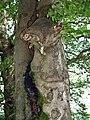 ET is back ... in Frauenwald - Rennsteig, Thüringer Wald - panoramio.jpg