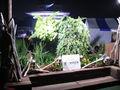 EXPO PLASA-2005-7-21.jpg