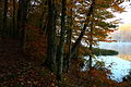 Early-morning-trail-mountain-lake - West Virginia - ForestWander.jpg