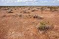 East of the Black Range - Flickr - aspidoscelis (8).jpg