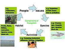 An ecosystem