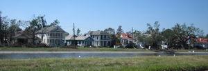 Bayou St. John - Egrets along Bayou St. John, October, 2005