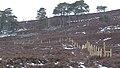 Electric Fence (An Sgòr Dubh) on Mar Lodge Estate (02APR13) (5).jpg