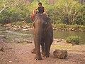 Elephant riding.jpg