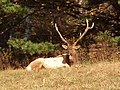 Elk big field 1 - panoramio.jpg