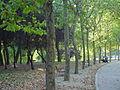 En bici por el parque forestal de entrevías (3).jpg