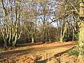 Epping Forest - geograph.org.uk - 109186.jpg