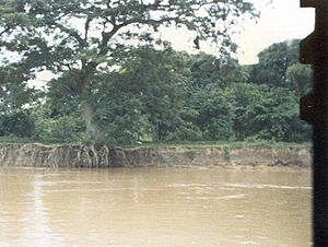 Apure River - Erosion at the left bank of the Apure river, near the small town of El Samán (Apure State, Venezuela)