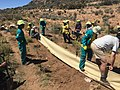 Erosion hedge construction.jpg
