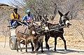 Eselskarre in Namibia.jpg