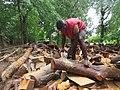 Essay Photo1 - Cutting the trunck.jpg