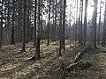 Esso-skogen 1.jpg