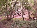Eston Nab woods.jpg