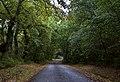 Estrada con acceso ao regato do Cepelo.jpg