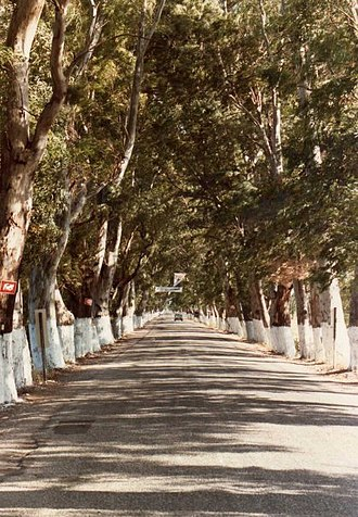 Gulf of Gökova - Old Muğla-Marmaris road in its section crossing the Plain of Gökova, homonymous with and located in the outlying waters of the Gulf of Gökova. Eucalyptus trees bordering the road were planted in 1936 to dry marshlands and help combat malaria.