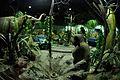 Evolution of Life - Dark Ride under Construntion - Science Exploration Hall - Science City - Kolkata 2015-12-04 6745.JPG