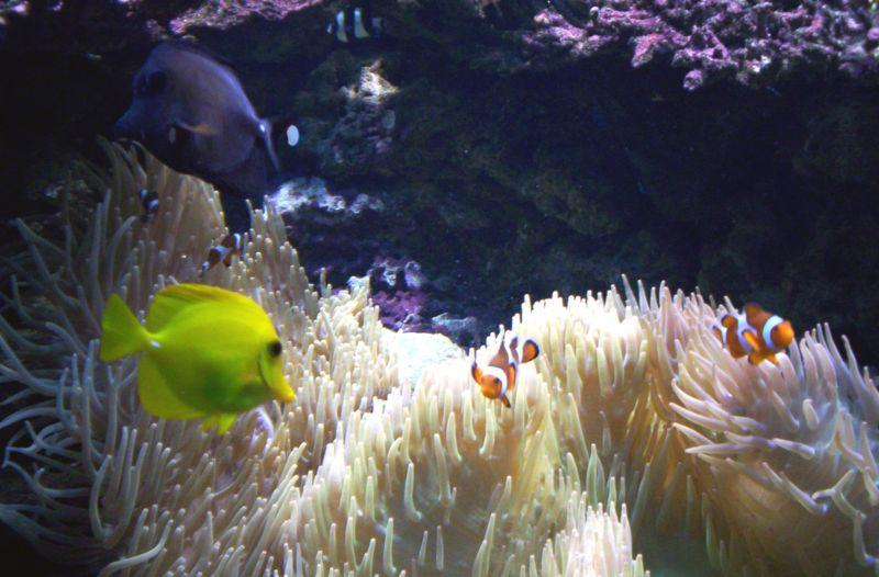 Peces exoticos acuarios feng shui mito