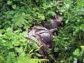 Fallen Totem Pole (7462039558).jpg