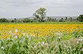 Farming crops rural Karnataka horticulture in India 2015.jpg