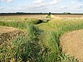 Farmland and drainage ditches - geograph.org.uk - 963039.jpg