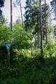 Feldatal Schellnhausen Feldatal Coniferous mixed forests a.png