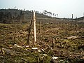 Felled Section of Loch Ard Forest - geograph.org.uk - 1295364.jpg