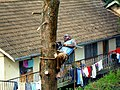 Felling trees 2.jpg