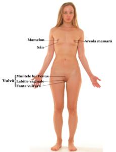 Organele genitale interne ale femeii