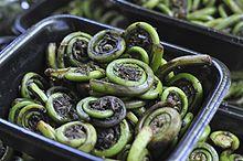 220px-Fiddlehead_ferns%2C_Portland_Orego