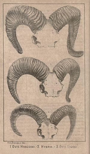 Journal of the Bombay Natural History Society - Image: First illustration JBNH Sa