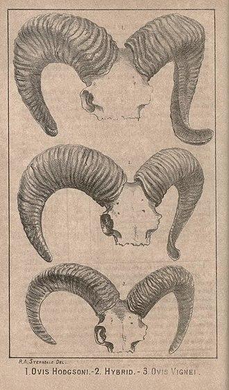 Journal of the Bombay Natural History Society - Image: First illustration JBNH Sa