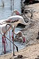 Flamingos on the beach.jpg