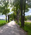 Flickr - Per Ola Wiberg ~ mostly away - Ekebyhovs avenue (allé) from May.jpg