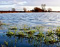 Flooded Fields on Hay Moor - geograph.org.uk - 1137416.jpg
