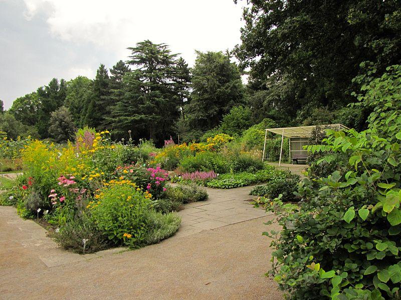 Datei:Flora (Koeln) Botanischer Garten 8322.JPG