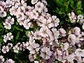 Flower-center134203.jpg
