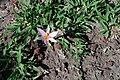 FlowerHuasca.JPG